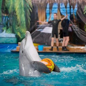 Дельфинарии, океанариумы Высоковска