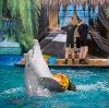 Дельфинарии, океанариумы в Высоковске