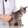 Ветеринарные клиники в Высоковске